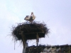 user_66_storch_april_2009