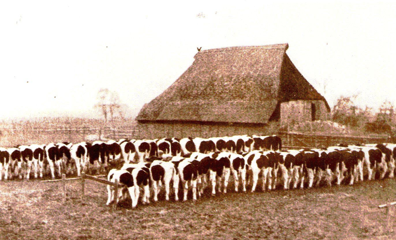 user_85_rinderzuchtschau_1926