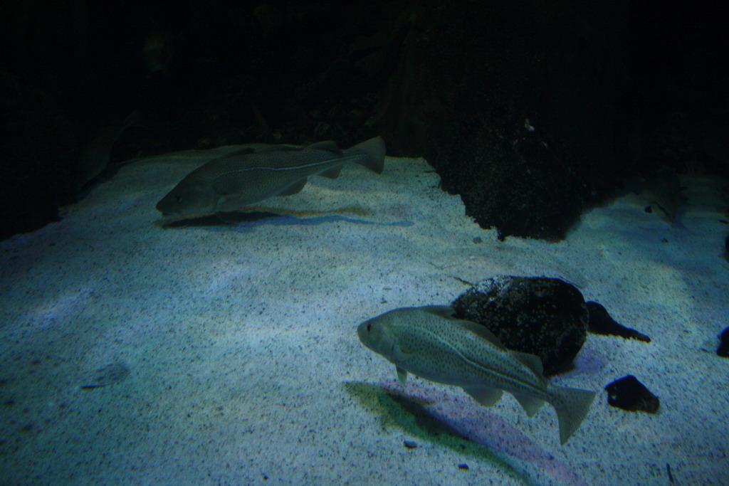 user_74_aquarium3_1pg
