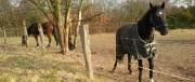 pferde-180x76